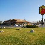 Foto de Super 8 Motel Lindsay Olive Tree Inn