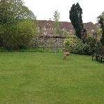 Deer in the Arundell garden