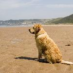 Monty at the beach Woolacombe