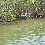  Heron.  We also saw cormorants, ibis, osprey, pelicans, etc