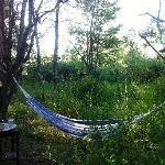 Hammock in the Willows