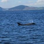 Photo of Dolphin Trips Avoch