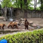 Bears waiting to be fed by one of the zookeepers.