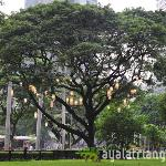 Ayala Triangle Gardens