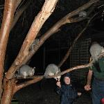 My great nephew & the owner feeding the Possums