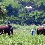 Guest get to ride elephants on the resort grounds