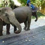 Elephants join guests for breakfast