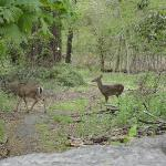  Who would think you&#39;d see deer in Yonkers?  A very short walk from the hotel.