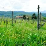 vineyard view of villa