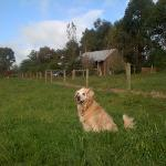  Jackson enjoying the surrounds at Bloomfield Cottages