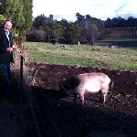 Ray with Pinot the Pig at Holmview Vineyard
