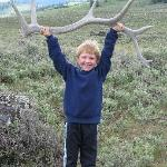 Looks like someone found an antler!