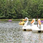 Fun paddle boats on the lake