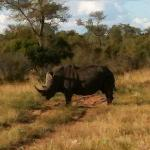  rhino found with open safari viewing vehicle
