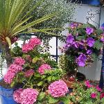 Plymouth in Bloom winnier