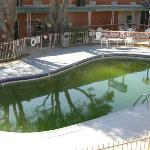 The soupy green swimming pool
