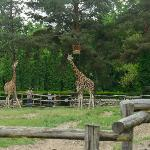 Palic Zoo