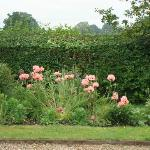  Gardens - Poppies