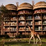 ‪Disney's Animal Kingdom Lodge‬