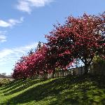  Property crab apple trees in bloom