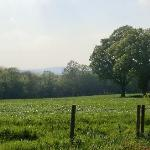 View over Surrey Hills from garden