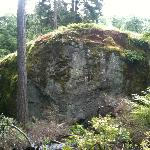 """Waterman Rock,"" Glacial Erratic boulder from Mt. Constitution in nearby Saratoga Woods"