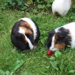  New arrivals-the site guinea pigs at play