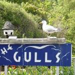  Their sign outside, with a real gull on top of it.