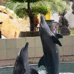  Dolphin show at Melka ...