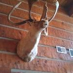 Taxidermy in lobby