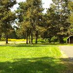  Beautiful grassy area with cabin available for rental
