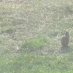 Prairie dogs - behind Inn at the Canyons