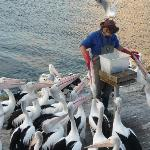 The pelican is so hungry that it wants to gulp the hand!