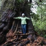  Visit to Meares Island