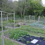  Fabulous kitchen garden at Cove Cottage