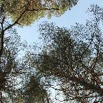 view of trees above the tent