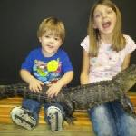 The Alligator Attraction