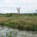 View of 4 sculptures in the bog landscape