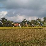  Paddy field