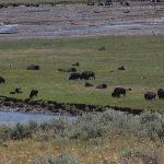 A herd of bison off in the distance in the Lamar Valley.