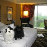 Domino and Kit Kat at Hotel Marlowe