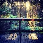 Foto de Woodlands Rainforest Retreat