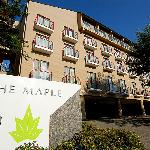 The Maple
