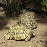 Photo de Le village des Tortues