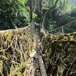 Longest root bridge