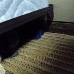 Someone's underwear under the bed
