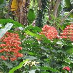  The Botanical Garden in HIlo