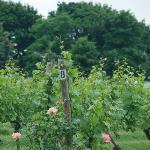 peconic bay vineyard