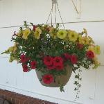  Flowering baskets outside every room