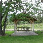  gazebo near grape vines